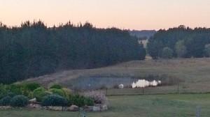 Morning mist at sunrise